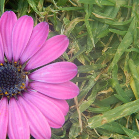 Purple Flower in the Grass by Eden Anyabwile - Nature Up Close Flowers - 2011-2013 ( plant, purple, nature, grass, flower )