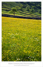 """Photo: #FourSeasonsFriday  Summer in Wharfedale  I've not been able to get up into the Dales this month to photograph any summer meadows due to the incessant rain, so I thought I'd better post one that I prepared earlier for#FourSeasonsFriday curated by +Karin Nelsonand +Stephonie Ogden.  This was taken a few years back, and my original write-up was: """"I had been for a walk in Upper Wharfedale the previous day and seen meadows full of buttercups on the slopes of Upper Wharfedale near Kettlewell, so I just had to return the following evening to catch them backlit by the setting sun.""""  Canon EOS 5D,EF24-105mm f/4L IS USM at 65mm, ISO 200, 1/40s at f22"""