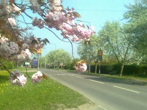 Photo: The A153 Louth Rd, north out of Horncastle, surrounded with blossom.