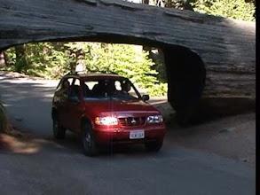 Photo: auto pod sekvojí