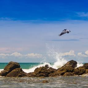 Jaco Peace by James Woodward - Landscapes Beaches ( jaco, beach, pelican, costa rica, tokina )