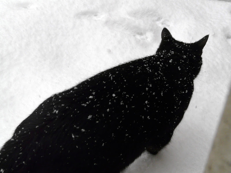 Nero sulla neve. di T.