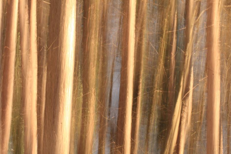 Nel bosco... di aag