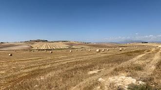 Campo de mies en la comarca de Los Vélez con los rulos de paja en el horizonte.