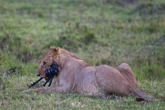 Photo: Photography in the Masai Mara