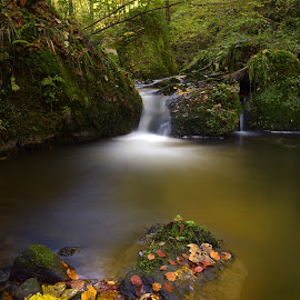 The Milky flow by Marco Bertamé - Nature Up Close Water ( water, autumn, green, fall, forest, long exposure, leaves, rocks, milky,  )