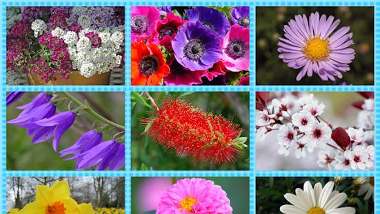 FlowerWorld: Kids Learn Flower - náhled