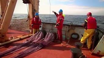 Ozeane im Klimawandel