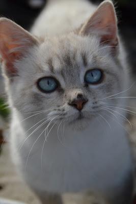 curiosità felina. di Marco Boi Passione Photo