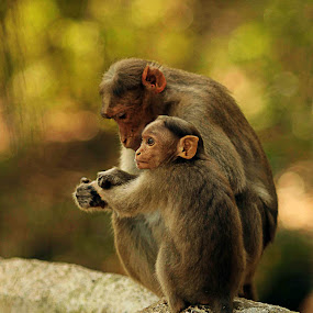 The Palmist by Balaji Mohanam - Animals Other Mammals