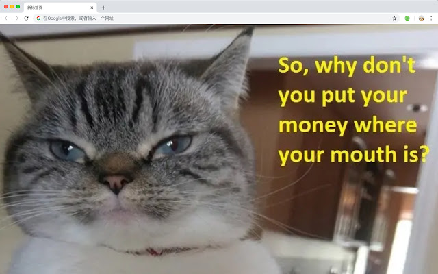 Lol Cats HD Wallpapers Popular Webs Themes