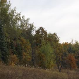 Есен by Georgi Kolev - Novices Only Landscapes ( небе., ден., есенен., тишина., дървета. )