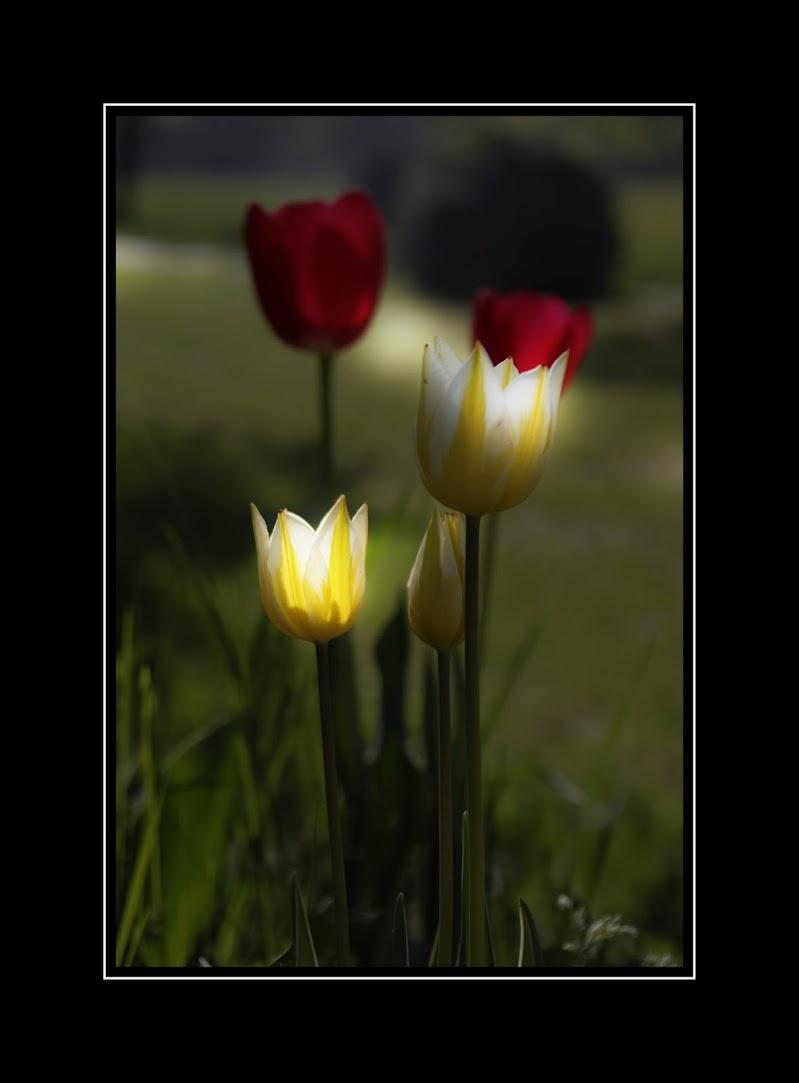 Dopo il buio, basta un raggio di luce di mauro_zoboli