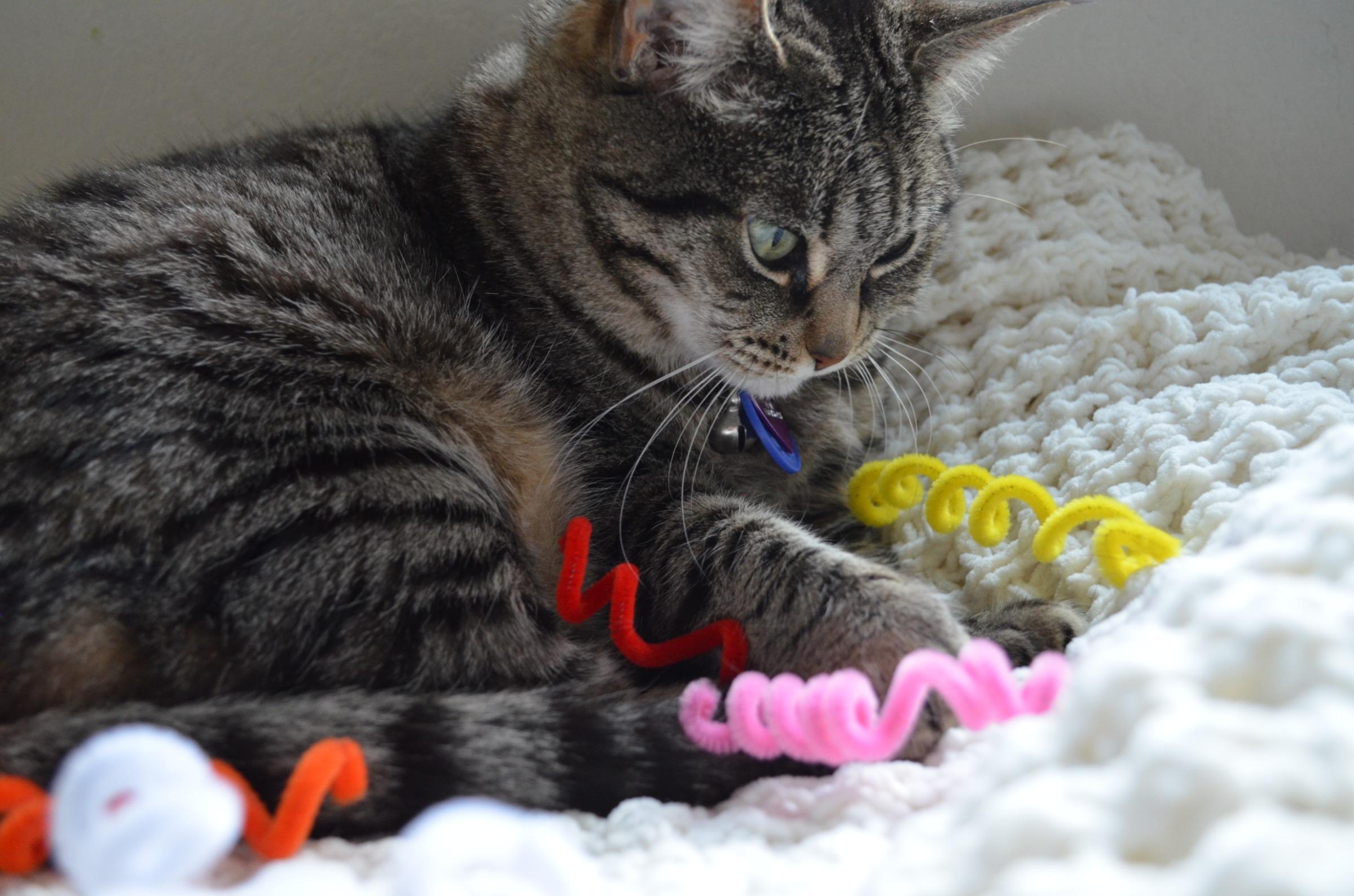 cheap kitten toys