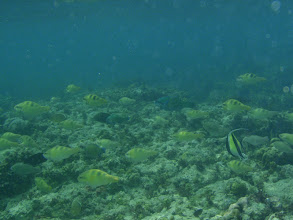 Photo: Parrotfish Shoal, Siquijor Island, Philippines