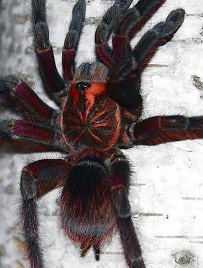 Nya Spindlar mm