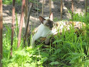 Photo: In de tuin , hhmmm vers gras ruik ik!