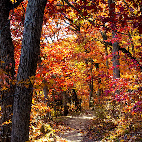 Starved Rock Park, IL by Samer Shaur - Landscapes Forests ( redtrees, pwcautumn, forest, trails, starvedrockpark, fallcolors )