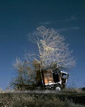 Photo: Truck & Tree
