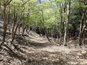 林道へ降りる道