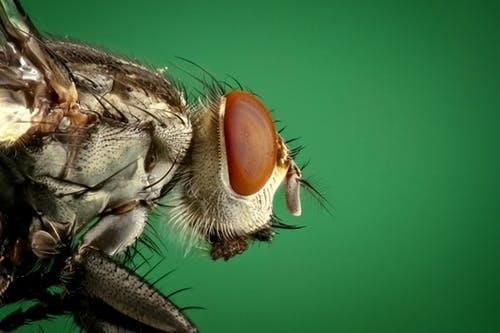 Macro Photography of Brown and Black Fly