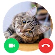 Cat Call me : Cat Video Call & Cat Call prank