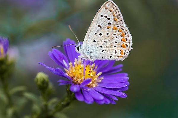 Butterfly di Simone Fedeli