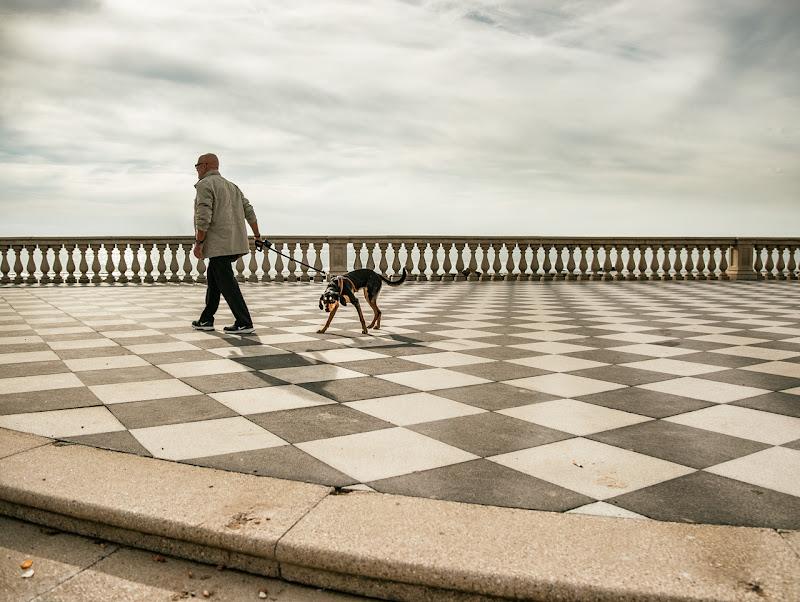 chess walk di bi
