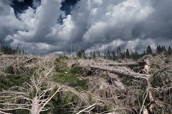Spravvissuti e morti alla tempesta Vaia di brunosma