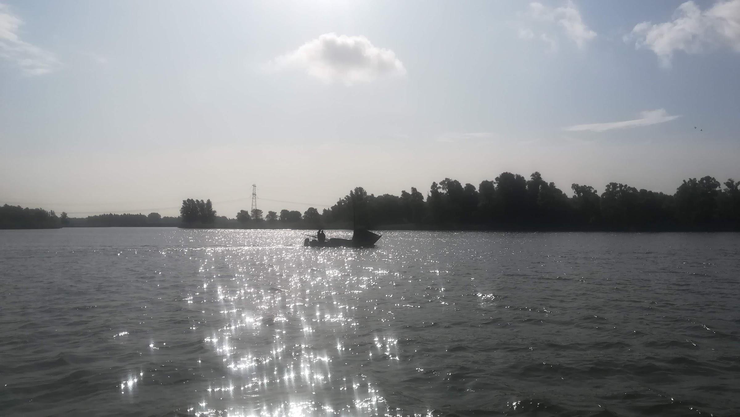 De zalmschouw: karakteristiek silhouet in de Biesbosch.
