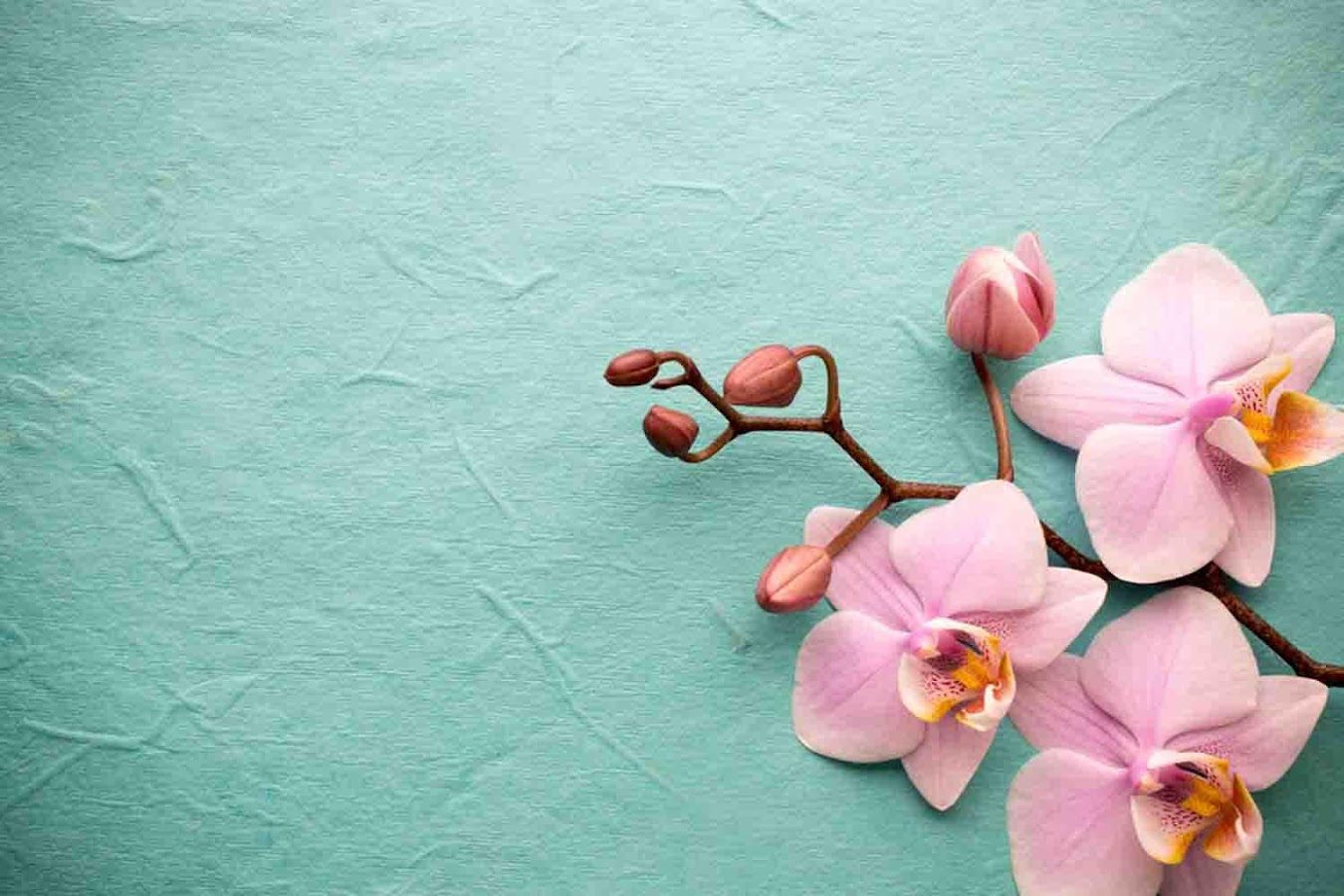 orchid wallpapers backgrounds images - photo #24