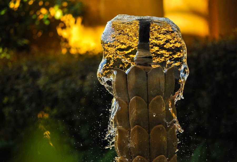 Dancing Water by Manu Vincent - Abstract Water Drops & Splashes ( lights, water, macro, nature, waterscape, waterfall, dark, feeding, yellow, sunlight, evening )