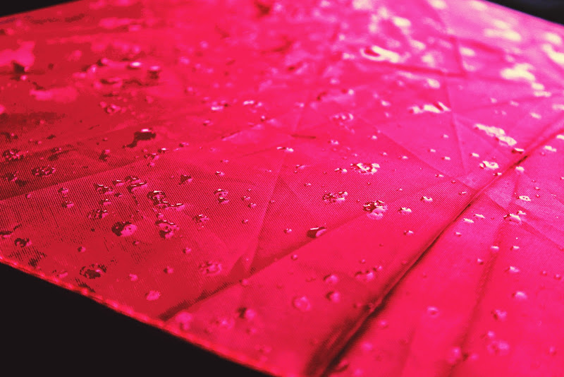 pioggia in rosa di giulia_giustarini