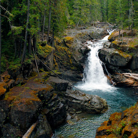 Silver Falls by Shawn Vanlith - Landscapes Forests ( forests, waterfall, white pass )