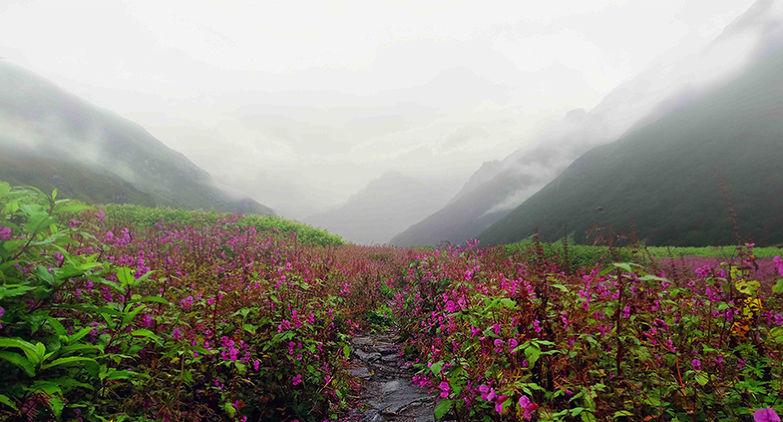 The Valley of Flowers Trek: Best Monsoon Trek