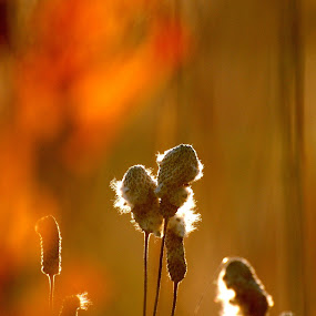 Weed Bursts by null - Uncategorized All Uncategorized ( sunset, fall, bursts, weeds )