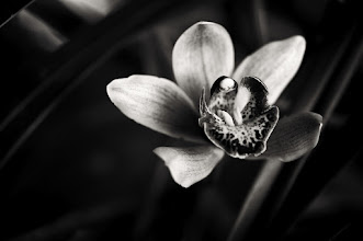 Photo: not feeling too good at the moment, bed time I think.... hope you all had a great weekend... #monochromemonday  #monochrome #bwphotography #flowerphotography #orchids #flower #breakfastclub  #monochromeartyclub