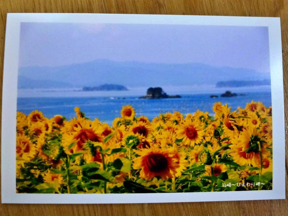 佐良スタジオさんのポストカードコレクション 29.泊崎~ひまわり岬
