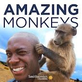 Amazing Monkeys