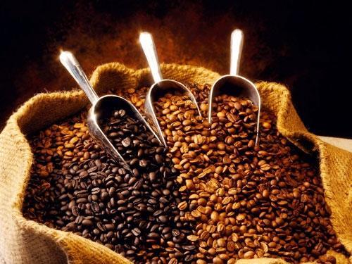 Cà phê nguyên chất giá sỉ cà phê Motherland mang lại nhiều điều bất ngờ cho bạn