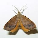 Orange Wing Moth