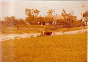 Photo: kaksi hevosvoimainen kulkuneuvo