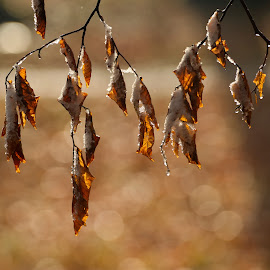 The remaining by Andrija Vrcan - Nature Up Close Leaves & Grasses ( snow, leaves,  )