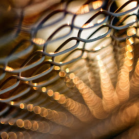 Golden Fence  by Marianna Armata - Abstract Fine Art