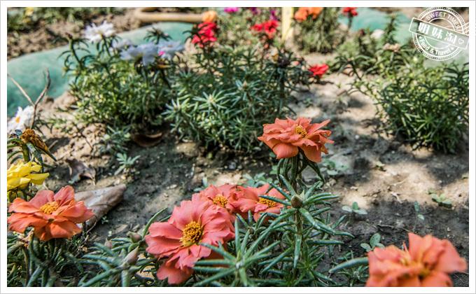 大東溼地公園陶園非常多花