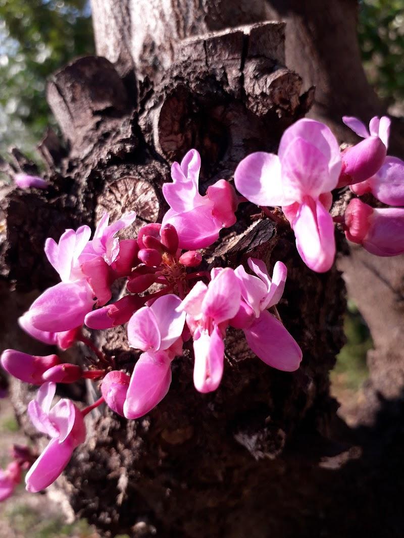 Legno fiorito di Click-clack