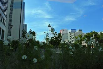 Photo: 西