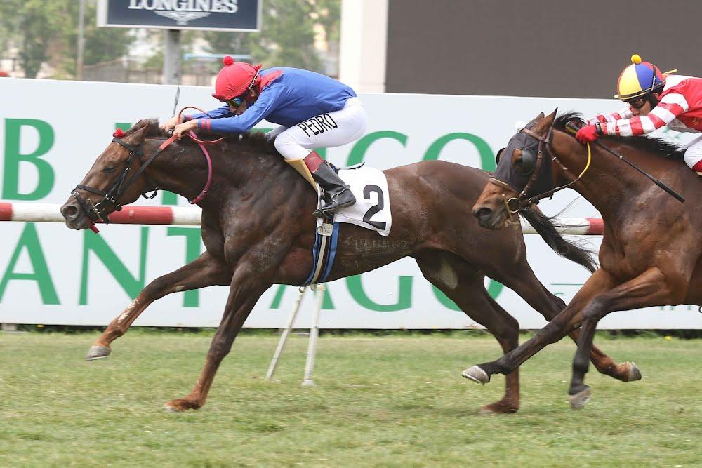 El Cacheton (Dangerous Midge) se queda con Handicap (1000m-Pasto-CHS). - Staff ElTurf.com