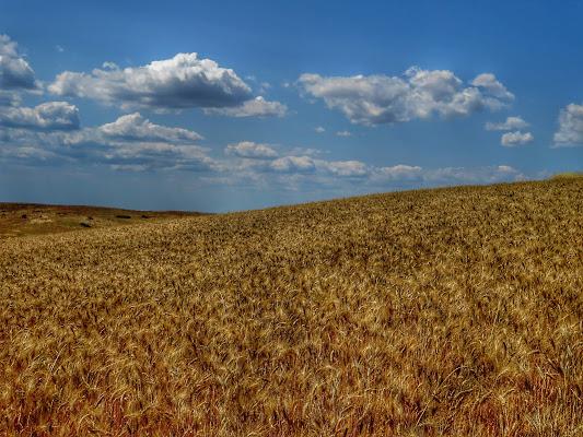 La collina di grano di Giorgio Lucca