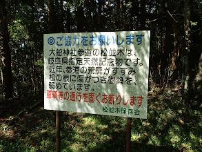 松並木の注意看板